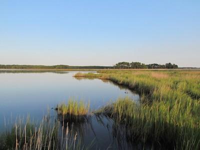 CBEC wetlands