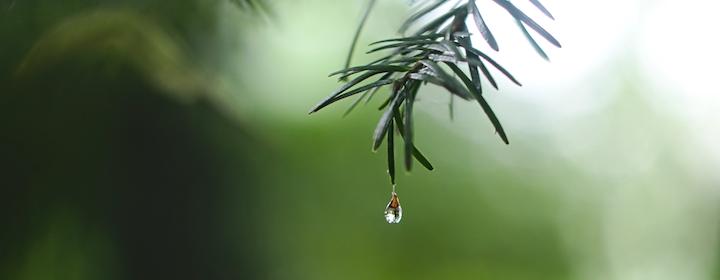 Raindrop-pine-ed-leszczynskl-R3ofE-8DyLk-unsplash.png