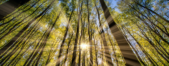 Sun_thro_trees-9JxubXPaididg-unsplash.png