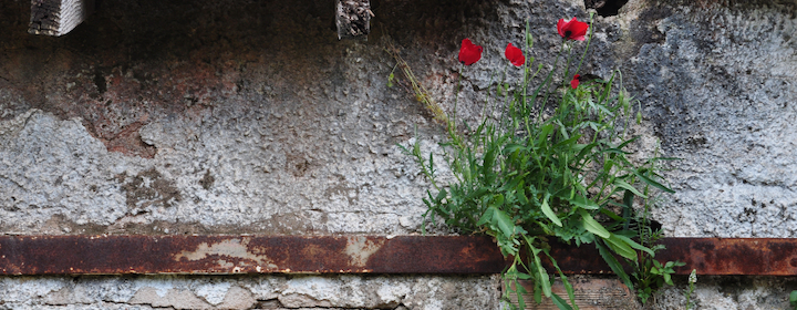 flowers_rusty_wall.png