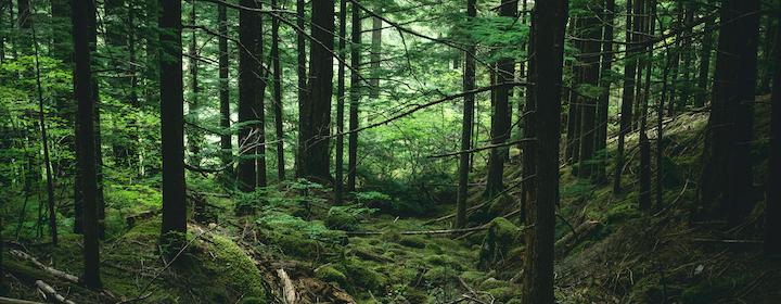 forest_with_mosses-milk-tea-unsplash.png